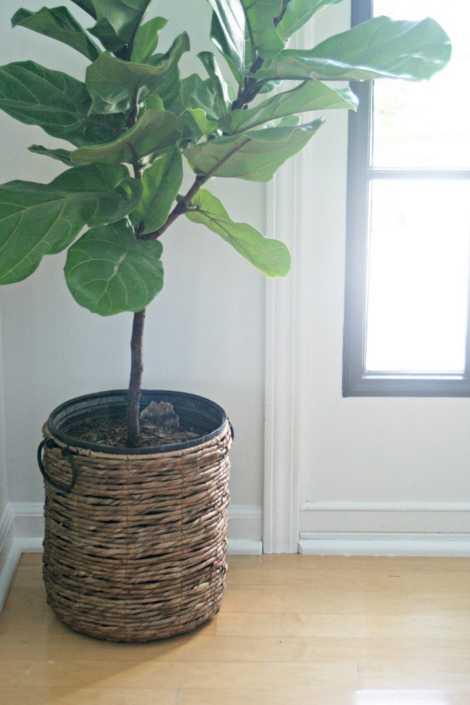 A round up of vinyl appliance decals, faux fiddle leaf fig trees, and etsy pillow stores